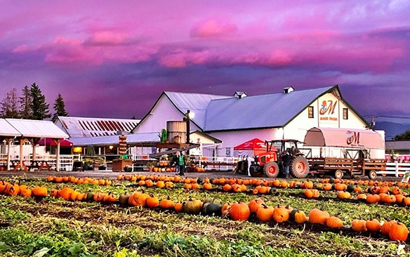 maris-farms