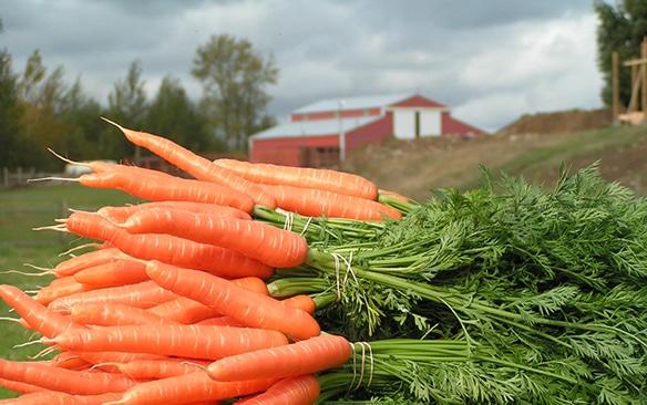 take-root-farms