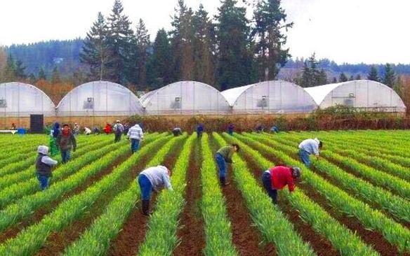 knutson-farms