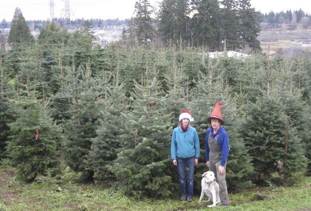 pfaffs-christmas-tree-farm